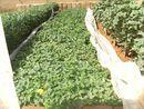 On a créé une entreprise qui développe l'envoi de semences adaptées au climat tropical