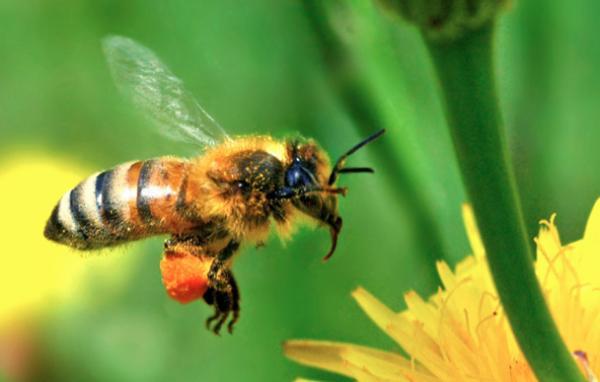 J'ai décidé de fabriquer des nichoirs pour préserver les abeilles !
