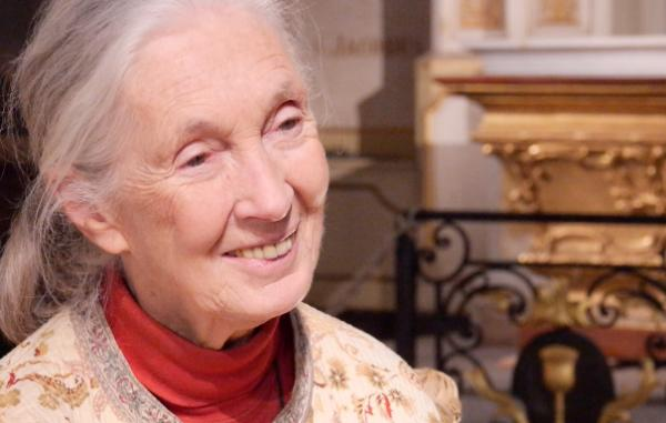 Jane Goodall - On peut encore changer les choses !