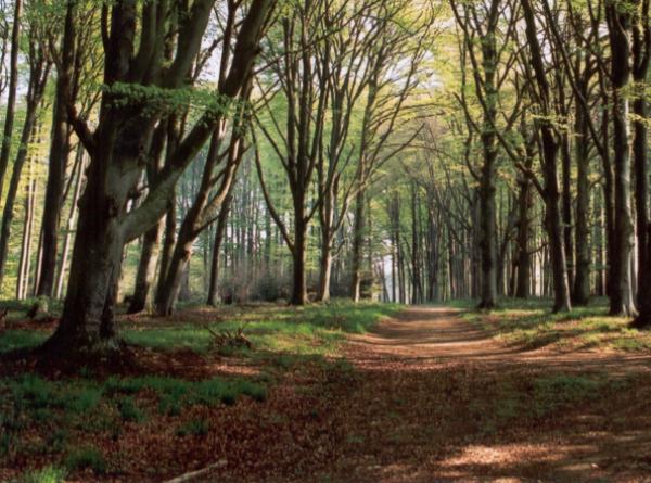Et si on protégeait au maximum nos arbres ?