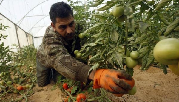 Et si on créait un outil d'entraide locale pour les petits agriculteurs ?