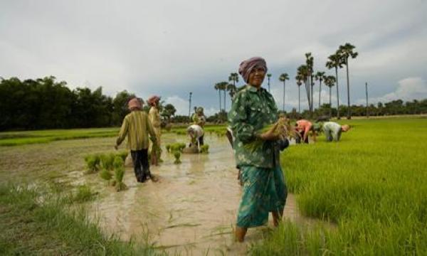 On a décidé de former les cambodgiens à l'agriculture naturelle