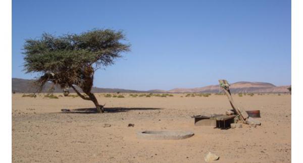 On a décidé de planter des acacias pour faire reculer le désert !