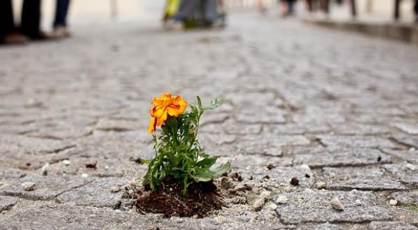 On plante des graines partout, des fleurs à la volée !