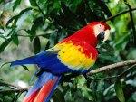 Le Costa Rica a décidé de fermer ses zoos et souhaite libérer les animaux de leurs cages.