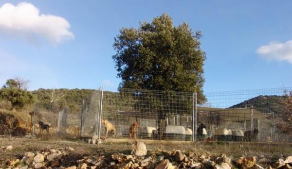 On a créé une association pour le respect et la défense de la vie animale
