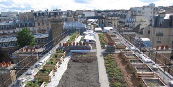 Et si on créait des potagers sur les toits ?