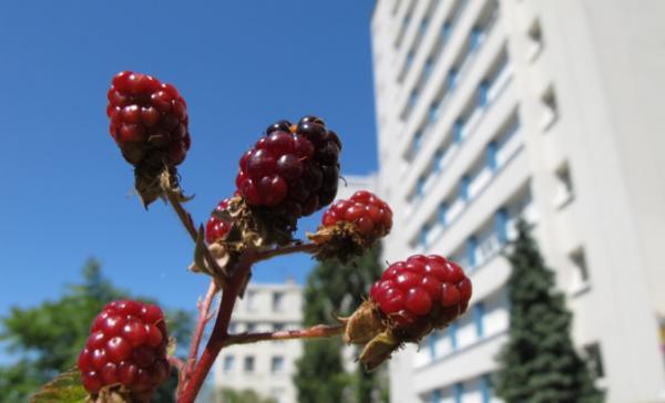 Et si chaque commune de France plantait des arbres fruitiers et remplaçait les arbres décoratifs par des comestibles ?