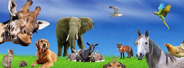 J'ai décidé de dispenser des formations à distance en naturopathie pour animaux