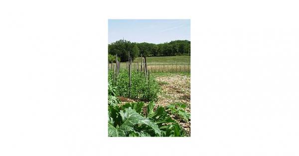 J'ai décidé de mettre mes terres à disposition de tout ceux qui souhaitent expérimenter l'agriculture