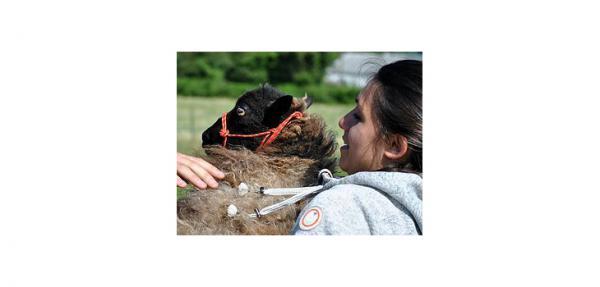 J'ai décidé de monter une ferme respectueuse de la nature qui soit également un refuge pour des animaux maltraités ou abandonnés