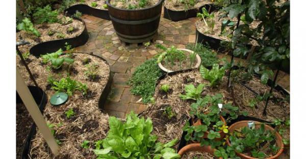 J'ai décidé de créer un jardin partagé sur les principes de la permaculture